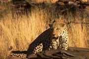 サファリパーク - Safari Park