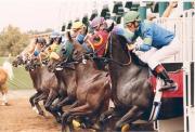 デルマー競馬 - Del Mar Racing