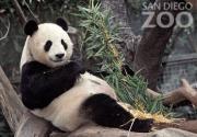 サンディエゴ動物園 - San Diego Zoo